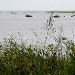 Findlingsfeld am Meer