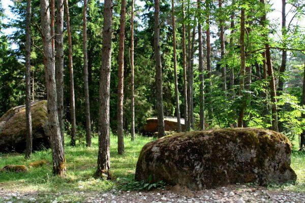Findlingsfeld im Wald